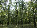 Sárkeresztúr, 8125 Hungary - panoramio (6).jpg