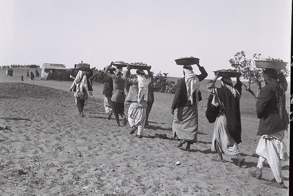 SERVANTS TAKING FOOD TO THE GUESTS ATTENDING AN ARAB FARMER'S WEDDING IN THE NEGEV. מלצרים בדואים נושאים על ראשיהם את כיבוד ומטעמי החתונה הבדואית בדרוD813-119
