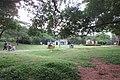 SZ 深圳 Shenzhen 蛇口 Shekou Nanshan 四海公園 Sihai Park plants and trees Sept 2017 IX1 06.jpg