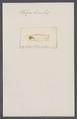 Salpa levis - - Print - Iconographia Zoologica - Special Collections University of Amsterdam - UBAINV0274 092 08 0044.tif