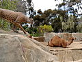 San Diego Zoo April 2013 25.JPG