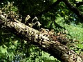 San Juan Botanical Garden - DSC07064.JPG