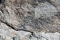 Sandy dolostone (Dunham Dolomite, Lower Cambrian; Route 2 roadcut, southeast of the Lamoille River bridge, Vermont, USA) 2.jpg