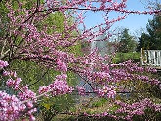 Hamilton Township, Mercer County, New Jersey - Sayen Park Botanical Garden