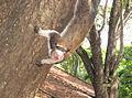 Scary Squirrel, Habanara (9807074886).jpg