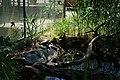 Schildkröte an Wand ruhend Zoologischer Garten Hof 08062019.jpg