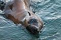 Seal (19803752020).jpg