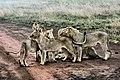 Serengeti National Park, Tanzania (Unsplash 2Nvfrm2wLQY).jpg