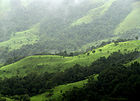 Shola Grasslands and forests in the Kudremukh National Park, Western Ghats, Karnataka