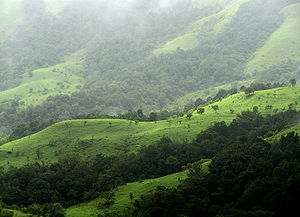 Forestry in India - Western Ghats are another bio-active forest cover of India. Above Kudremukh National Park, Karnataka.