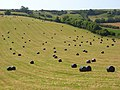 Silage bales, Sydling St Nicholas - geograph.org.uk - 909718.jpg