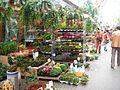 Singel Flower Market 002.JPG
