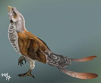 Sinornis - Reconstruction of Sinornis