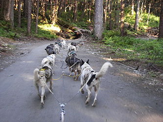 Sled Dog Discovery & Musher's Camp 4.jpg