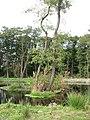 Small island in fishing lake - geograph.org.uk - 1520723.jpg