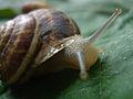 Snail 2860.JPG