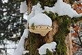 Snow-covered mushroom on a tree - panoramio.jpg
