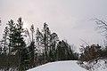 Snowy Forest Road (38738265944).jpg