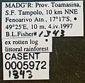 Solenopsis mameti casent0005972 label 1.jpg