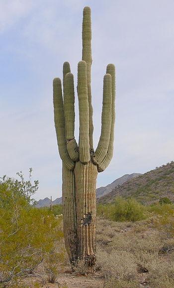 Legend Trail AZ Real Estate