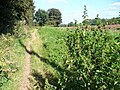 South-west of Aston - geograph.org.uk - 536858.jpg