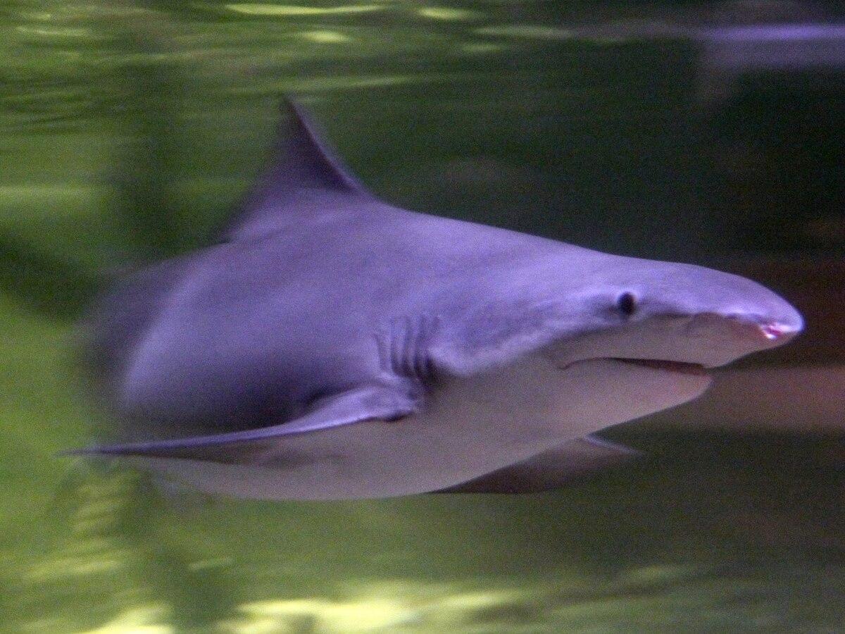 Sharkn