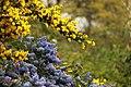 Spring in London (6973552578).jpg