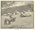 Spring lamb (Boston Public Library).jpg