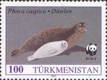 Stamps of Turkmenistan, 1993 - Caspian seals (Phoca caspica) adult with young.jpg