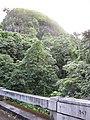 Starr-090623-1751-Aleurites moluccana-habit 1947 bridge and steep cliffs-Hana-Maui (24599668689).jpg