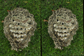 Stereo hornet nest.png