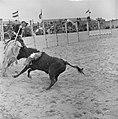 Stierengevecht in Tilburg tgv 65 jarig bestaan van Roomskatholieke Hogeschool, Bestanddeelnr 915-1496.jpg