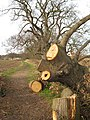 Suffolk Coastal Path - geograph.org.uk - 671831.jpg
