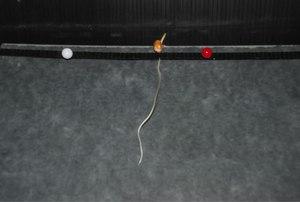 File:Swarming-Behavior-in-Plant-Roots-pone.0029759.s004.ogv