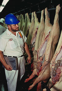 USDA inspection of pig.