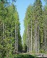 Syktyvdinsky District, Komi Republic, Russia - panoramio (5).jpg
