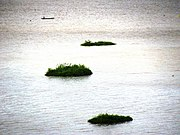 THE FLOATING NATIONAL PARK- The Keibul Lamjao National Park, Manipur.jpg