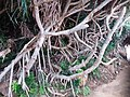 TW 台灣 Taiwan 新台北 New Taipei 萬里區 Wenli District 野柳地質公園 Yehli Geopark August 2019 SSG 126.jpg
