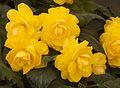 Tatton Park Flower Show 2014 042.jpg