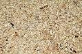 Texture segatura-DSC 0080.jpg