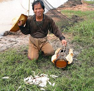 Opisthorchis viverrini - Thai fishermen catch fish (including infected ones) in nets and prepare fish-based meals with local herbs, spices, and condiments.