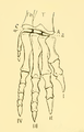 The Osteology of the Reptiles-209 dfg ghj dertg ert dert.png