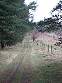 The Peddars Way skirting Brettenham Heath - geograph.org.uk - 1701440.jpg