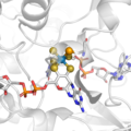 The active site of Mo or W-dependent formate dehydrogenase, a metalloenzyme that oxidizes formate to CO2.png