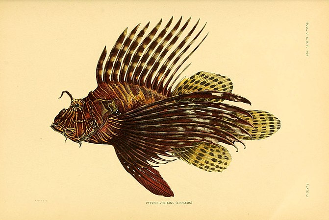 The fishes of Samoa (Plate LI) (5998452649).jpg