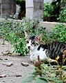 The lazy cat.jpg
