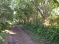 The old road to the ferry, near Pentowyn, Llansteffan - geograph.org.uk - 603906.jpg