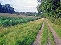 Track from Warren Hill - geograph.org.uk - 1471738.jpg