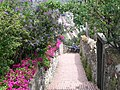 Trail in Corniglia (4712260226).jpg