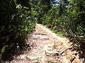 Trail to Waterfall - panoramio (4).jpg